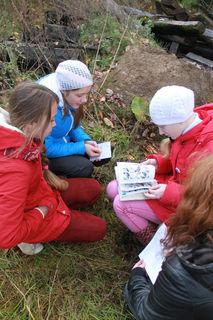 Турнир по орнитологии среди школьников