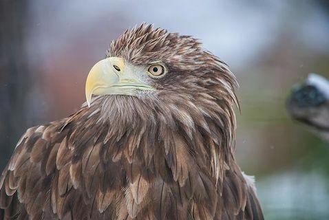 Птицы в объективе фотоаппарата