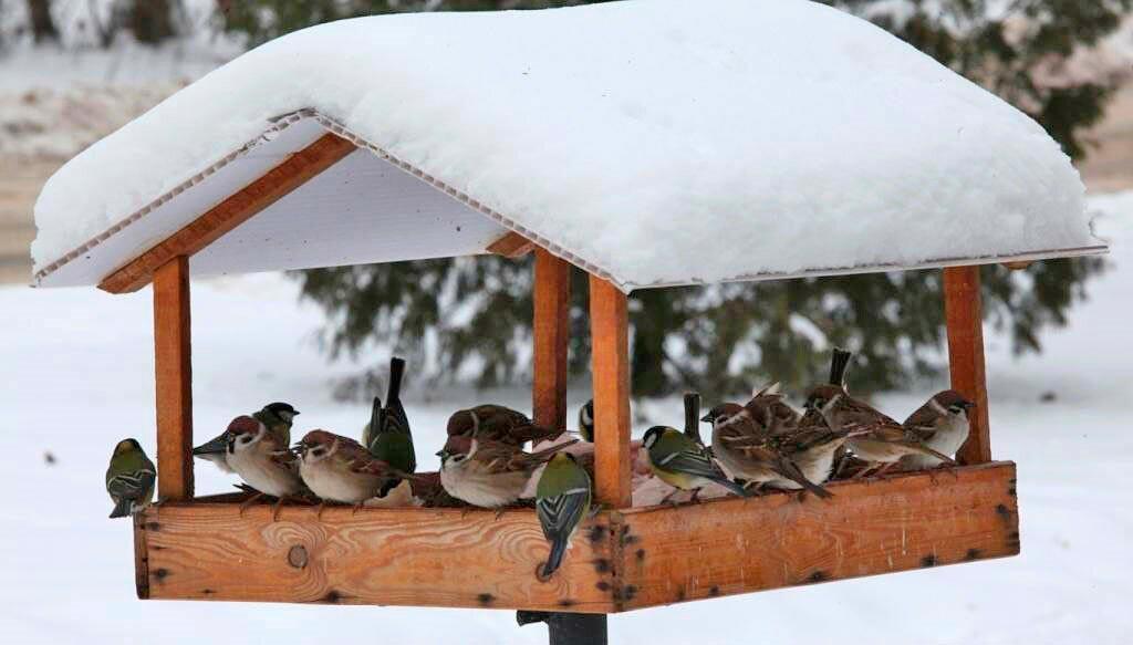 Кормушки птицы картинки